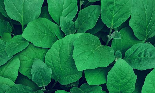 Miljoe-sertifisering-illustrasjon-av-groenne-blader